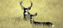 Hunting tourism